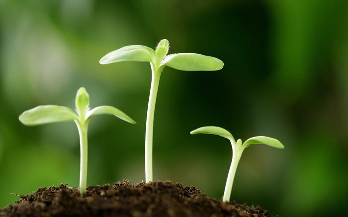自分で蒔いた種は良い芽も悪い芽...